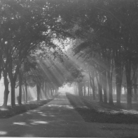 Sunlight through trees on Oswego Street in Liverpool